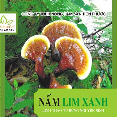 nam-lim-xanh-tien-phuoc-1351657881_500x0