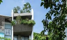 Nhà mặt phố 'lột xác' sau cải tạo nhờ vườn treo