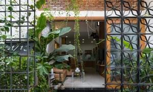 Nhà trong hẻm nhỏ đầy ánh sáng và cây xanh
