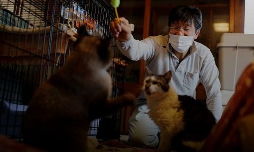 Người ở lại với đàn mèo trong thảm họa phóng xạ