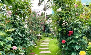 Vườn hồng gần 500 loài của nữ giám đốc