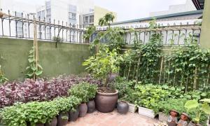 Khu vườn quê trong căn penthouse 320m2