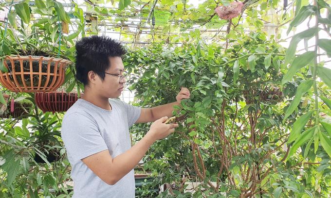 Giám đốc chi 400 triệu đồng làm vườn quê trên sân thượng