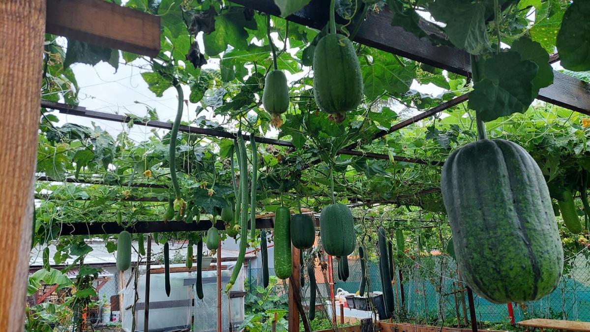 Vườn rau trái Việt trên đất châu Âu