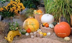 Trang trí bí ngô khổng lồ chơi Halloween